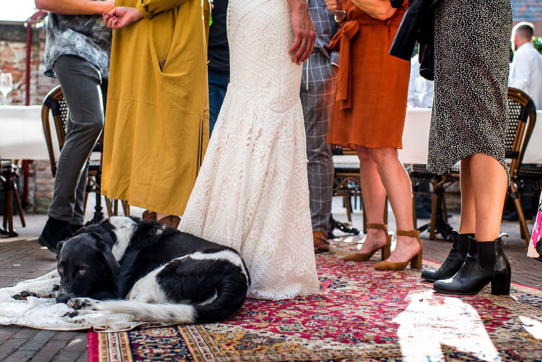 hond op bruiloft Trouwfotograaf Amersfoort